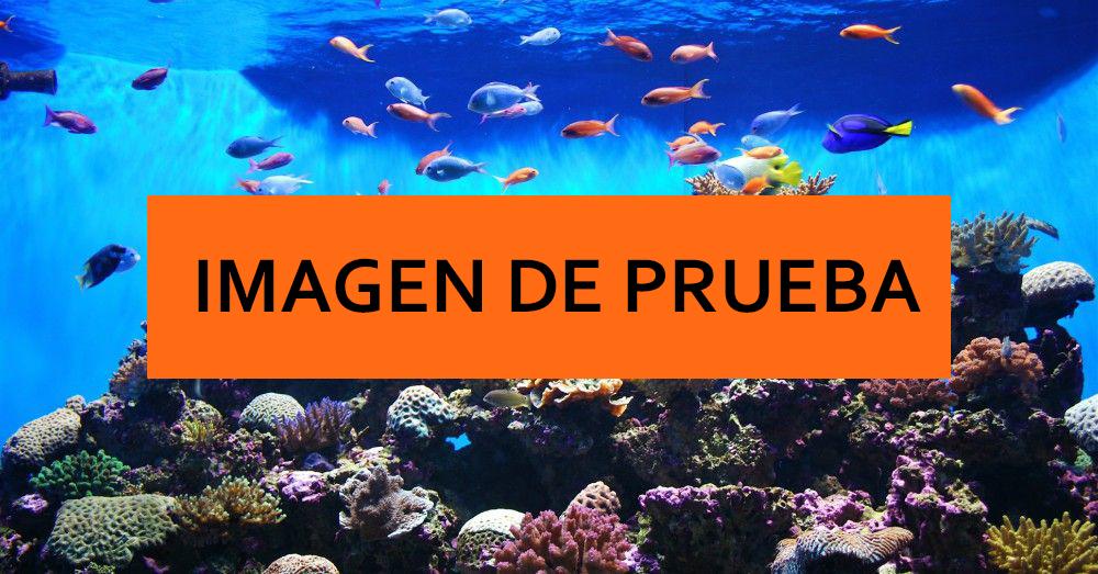 acuario4.jpg