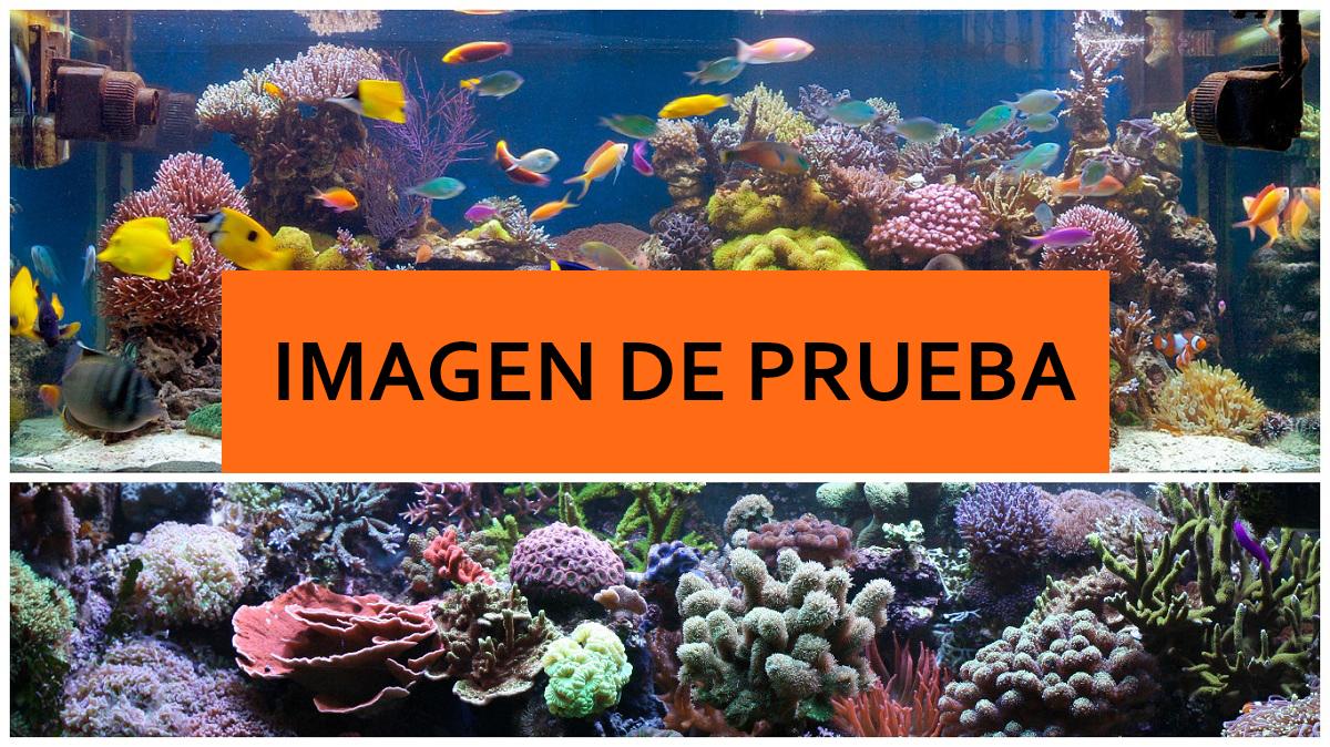 acuario5.jpg