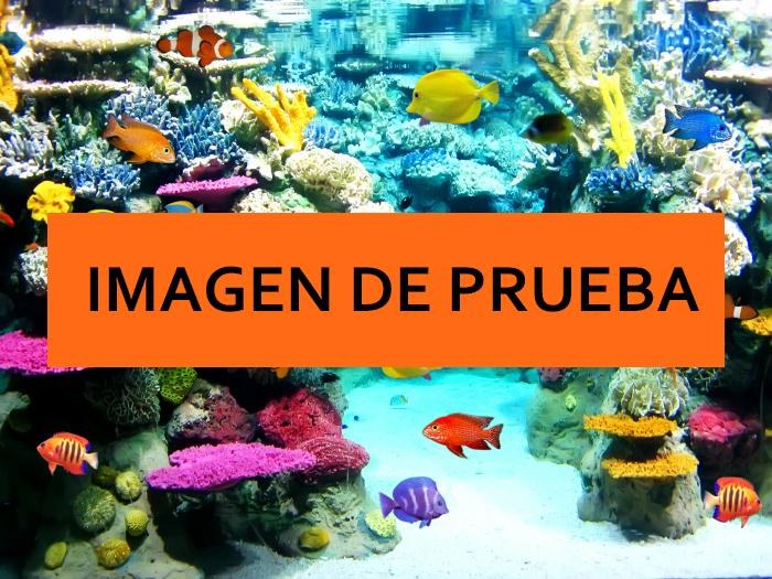 acuario6.jpg