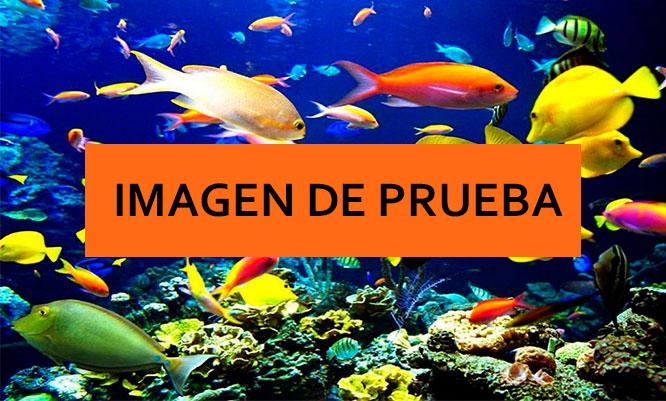 acuario8.jpg